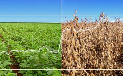 Esteja à frente do mercado: Previsão de colheita por Estado