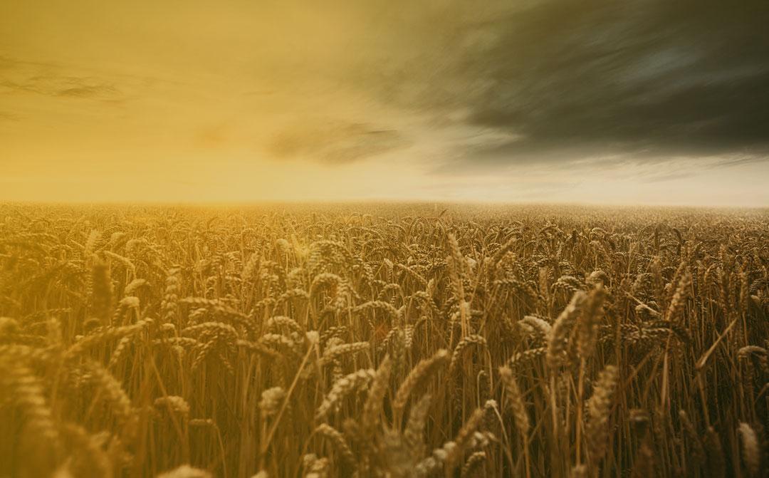 Clima: um desafio para o agronegócio