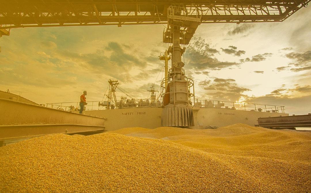 Exportações de milho: ex-ministro da Agricultura e atual presidente executivo da Abramilho, Alysson Paolinelli, comenta o cenário positivo
