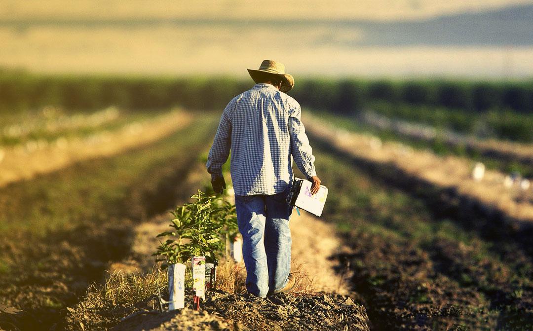 Agronegócio e a sustentabilidade