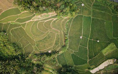Monitoramento via satélites: suporte aos financiadores do agro para conceder crédito aos produtores com segurança