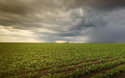 Chuvas atrapalham a colheita da soja no MT e produtores já contabilizam prejuízos