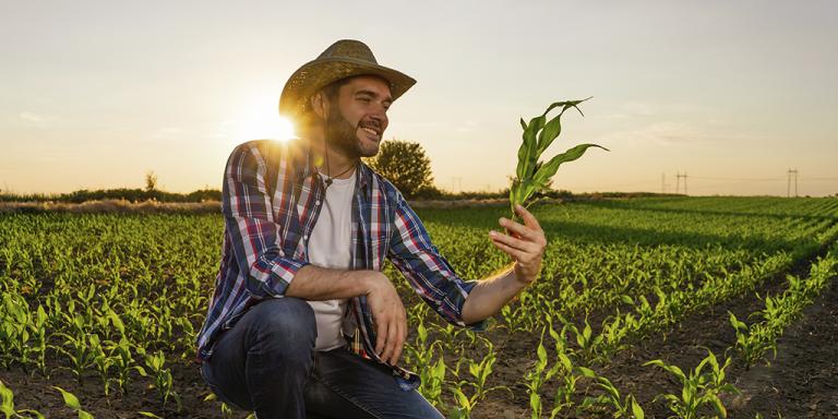 safrinha de milho 2021