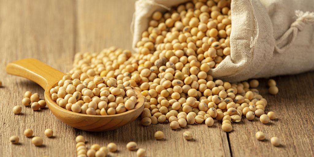 Sementes de soja, com o crédito certo, você consegue elevar sua produtividade.