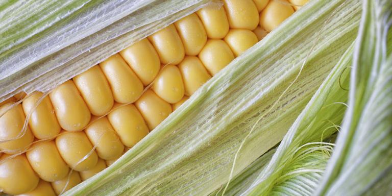 Sementes de milho Pionner, agora mais ao seu alcance, com o Crédito Rural da TerraMagna!