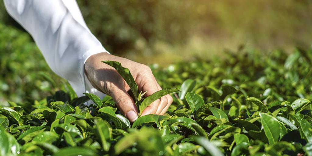 Custeio agrícola, uma modalidade do crédito rural que veio tranquilizar o produtor rural.