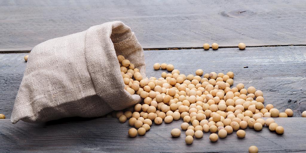 Produção de Sementes de Soja, uma forma melhor de aumentar a produtividade.